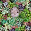 Rectangular arrangement of succulents; cactus succulents in a planter; Shutterstock ID 564043840; Purchase Order: prepaid; Job: ; Client/Licensee: Baum Txtiles; Other: