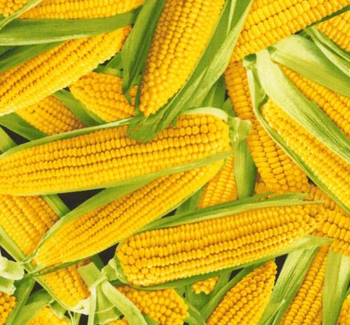 Corn / Elotes